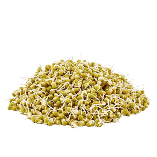 Organic  MUNG Sprouted Beans